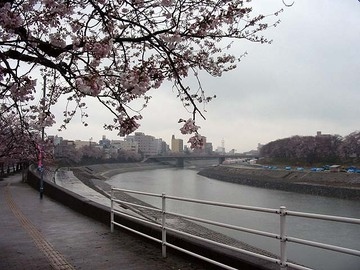 Asuwagawasakura44
